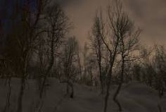 winter darkness